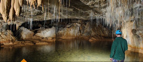 Explore Waitomo Caves